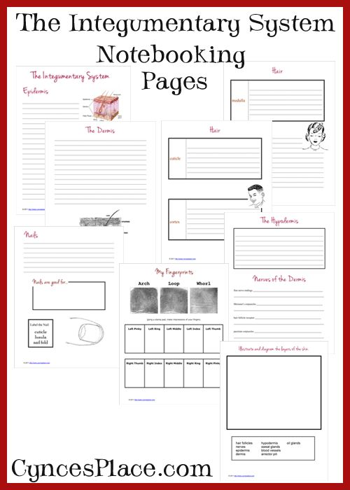 Human Body - Integumentary System Notebooking Pages