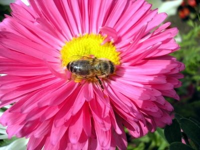 How to Use Dryer Sheets to Get Rid of Bees.