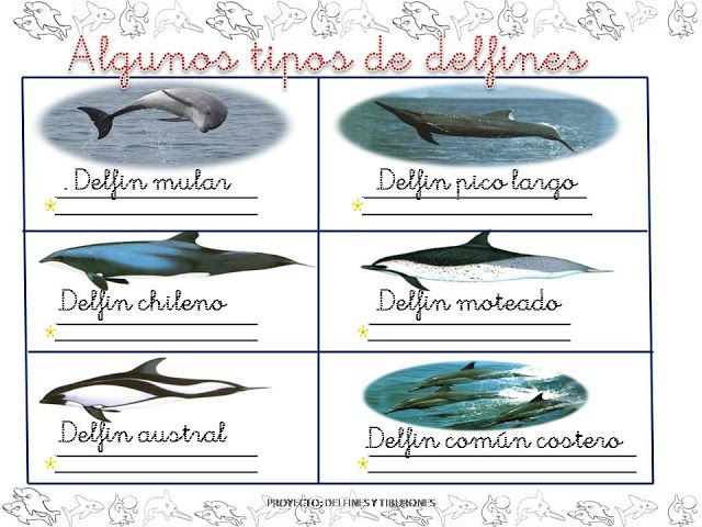 PROYECTO DELFINES - isabel belda martinez - Álbumes web de Picasa