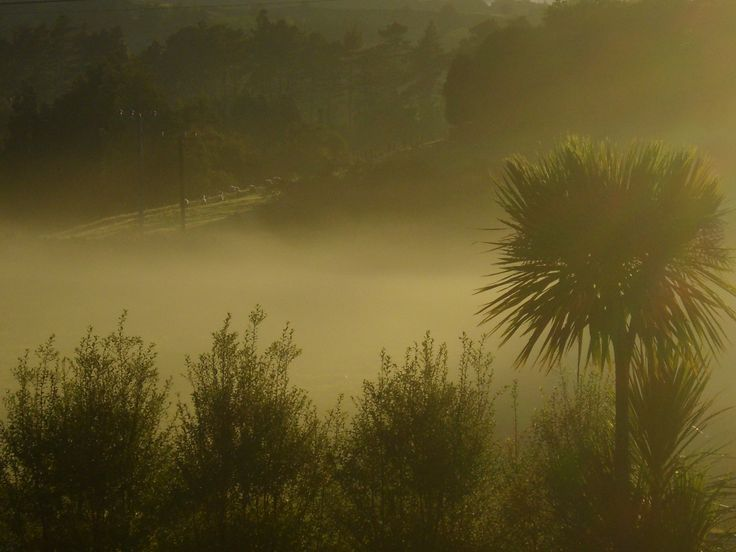 Misty Morning.  Maungatapere, New Zealand. Photo by sally Williams