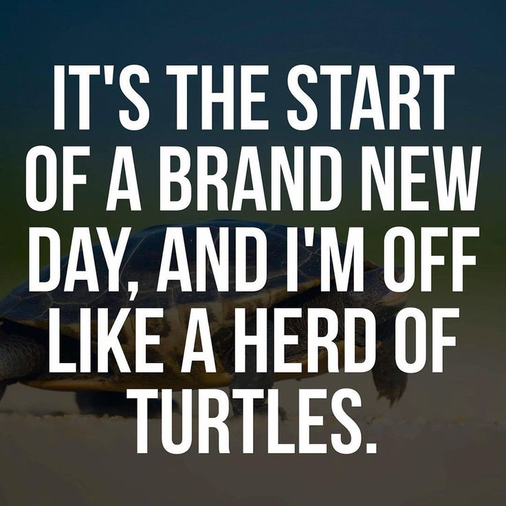 Anyone else need an energy reboot? .  #creativescrapbookermagazine #creativescrapbooker #csmscrapbooker #morningsmile #smile #thegoodlife #funny #turtles #newday