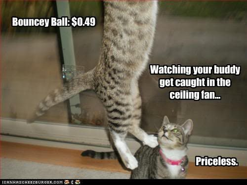 60 best ceiling fan comedy images on pinterest funny images we laugh at the sight of cats mischief gone wrong check out these 25 hilarious photos of cats stuck in things mozeypictures Choice Image