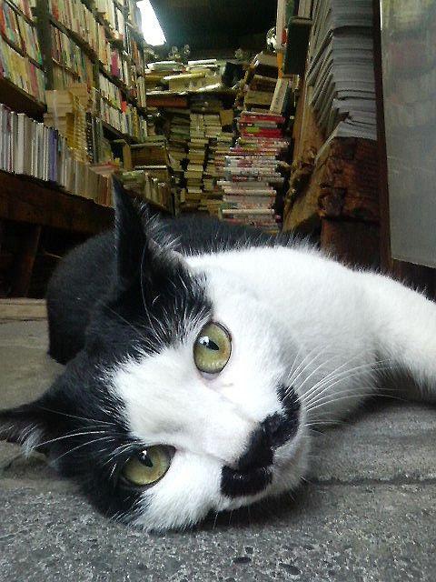 Bookstore Kitty