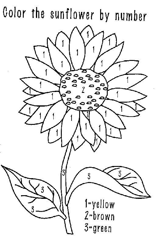 Sonnenblume - Malen nach Zahlen