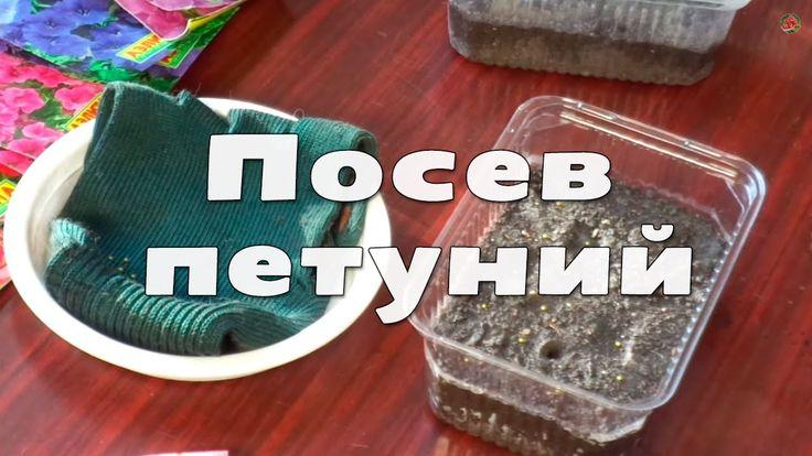 Посадка и выращивание петуний. Посев семян петунии (часть 1)