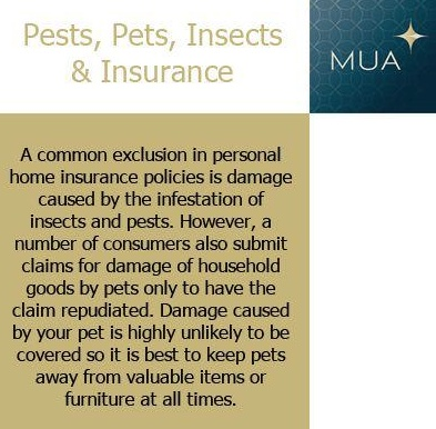 Pests, Insects and your #Insurance