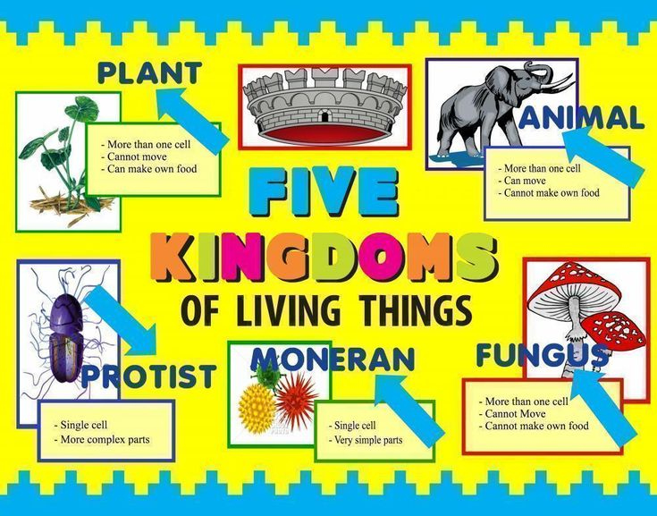Science Fair Project | Poster Ideas - Five Kingdoms of Living Things ...