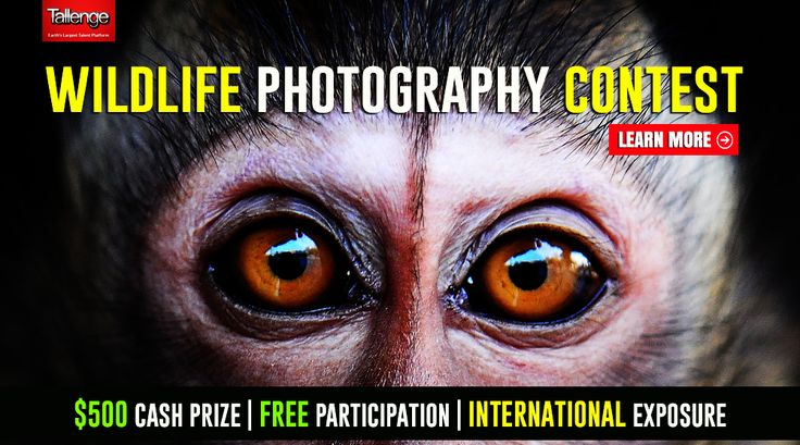 Calling all Wild Life Photographers #ComeToTallenge and witness some breathtaking photos of the Wilderness. Participate in our new #WildLifePhotography #Contest and compete against amazing photographers from around the world and stand a chance to win fame, recognition and $500 cash prize!  Click here, http://tlng.me/1ElfHny to participate in this contest.