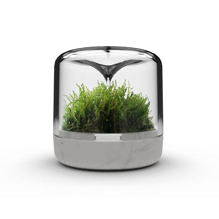 mossarium sanctuary luxe carrara with moss