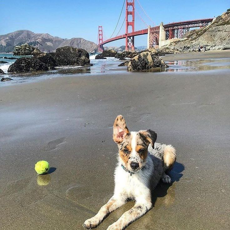 Where are you from? Tag us or mention us in your favourite pics of your pup with city landmarks in them!  @miniaussie_masi