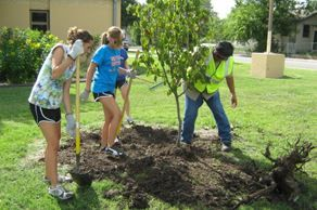 The Do's and Dont's for Planting Trees in Your Yard