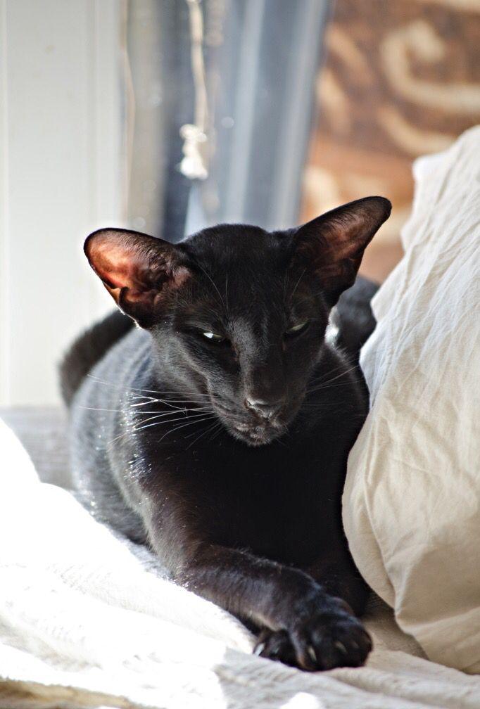 Black Cat E