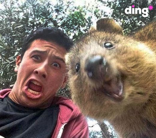 'Let me take a ‪#‎selfie‬...WAIT...AHHHH!!!!' Have you ever been photo-bombed by someone or something unusual? Let us know in the comments! www.ding.com