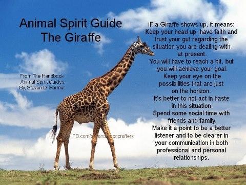 Animal Spirit Guide : The Giraffe