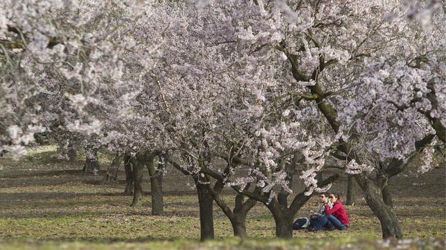 Diez cosas que puedes hacer gratis en Madrid. Quinta de los Molinos