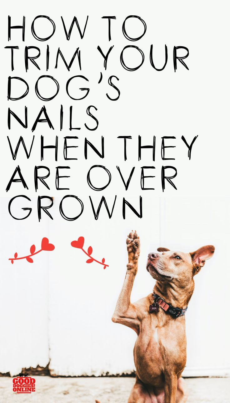 How To Trim Dog Nails That Are Overgrown In 2020 Dog Nails Trimming Dog Nails Doggy