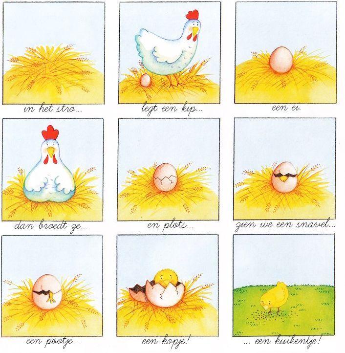 Afbeeldingsresultaat voor van kip naar ei
