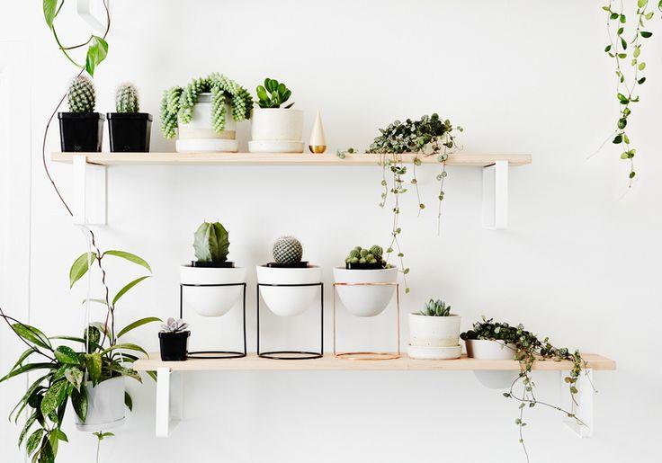 IVY MUSEの植物用壁面造作棚2 サボテン他