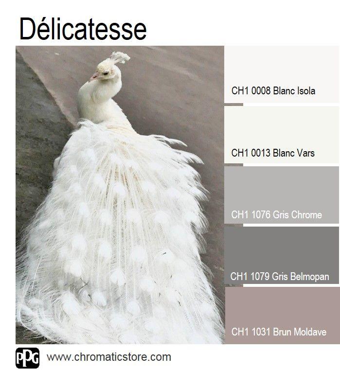 Voici une palette de #teintes neutres et délicates pour une #déco #intemporelle. www.chromaticstore.com