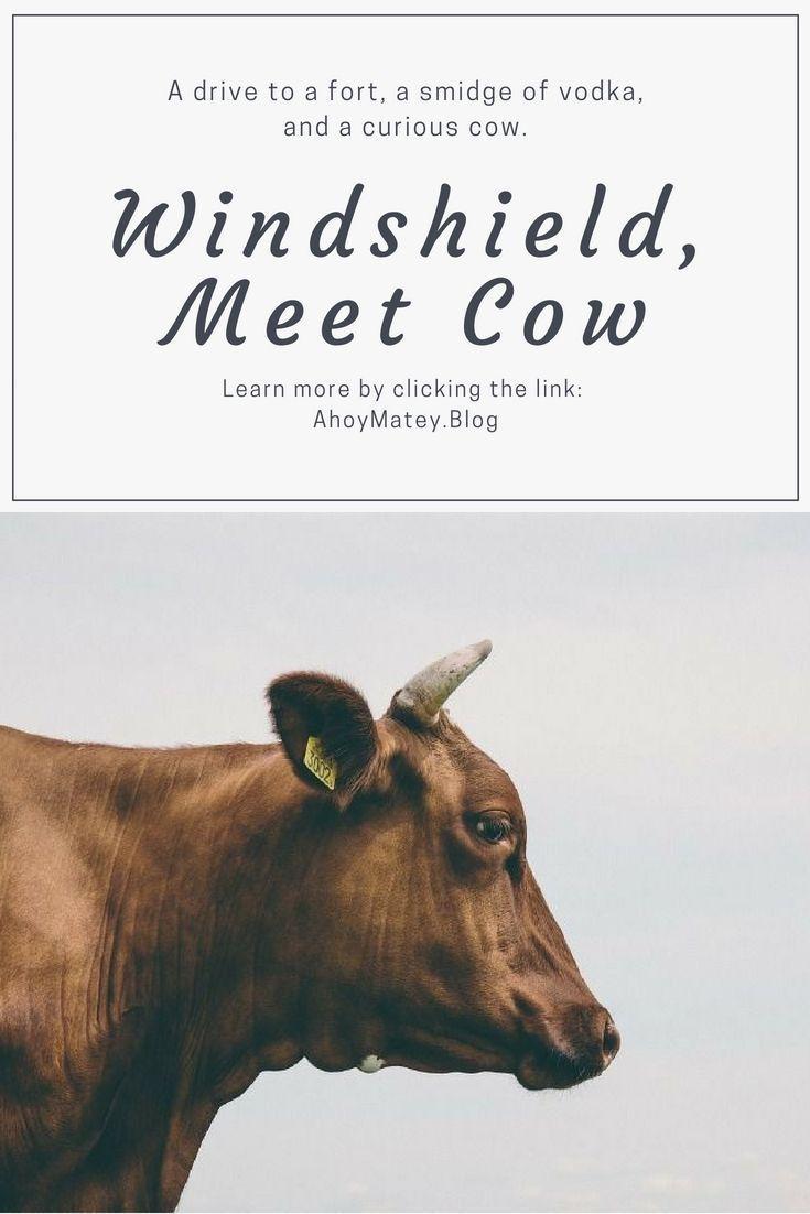 Windshield Meet Cow Travel Humor Dollar Car Rental Time Travel