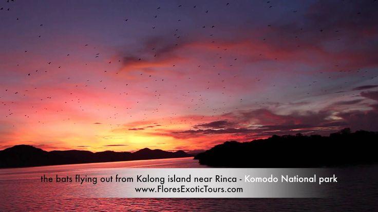 Flying bats in Kalong island Komodo National Park