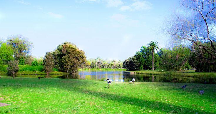 One Of 11 Ponds Of Centennial Park