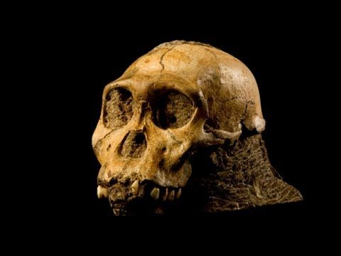 Lee Berger talks about stumbling across two-million-year-old fossils of an unknown species of ape-like creatures.