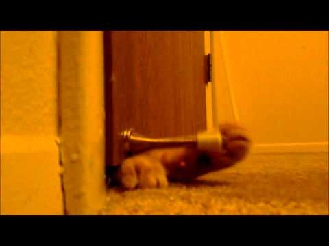 Alarm Clock Cat   The 30 Most Important Cats Of 2012