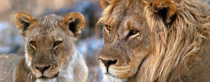 Südafrika und Nambia – zwei Länder im südlichen Afrika, die sich jedoch deutlich unterscheiden. Doch wo genau liegt der Unterschied? #1: Schwulenfreundlichkeit Südafrika ist in puncto schwule…