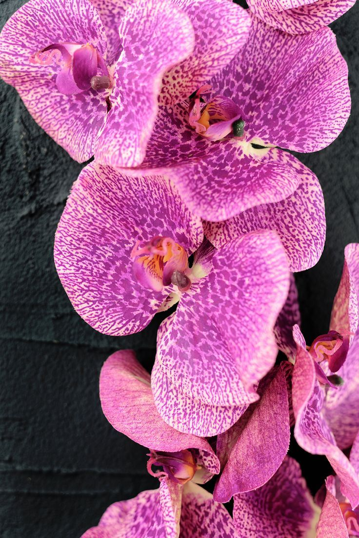 Hottest No Cost Orchid Flower Purple Style Have A Gorgeous Orchid