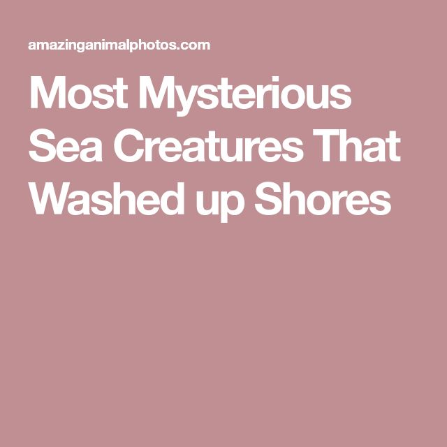 Most Mysterious Sea Creatures That Washed up Shores