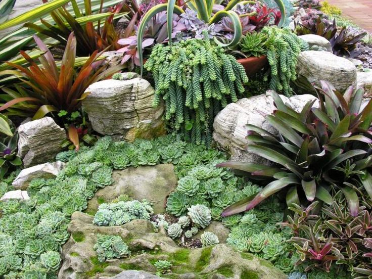 succulents and bromiliads