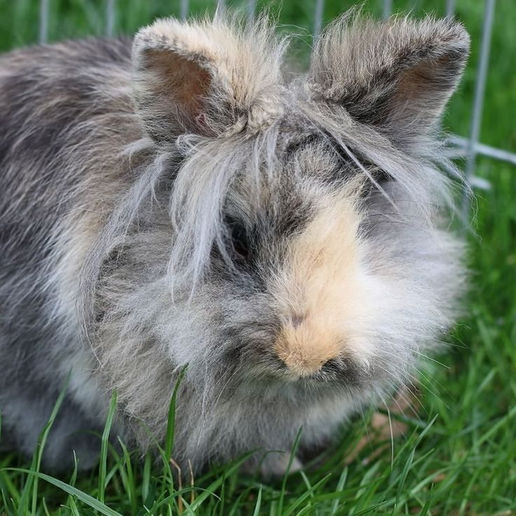 Puchaty królik na drugi dzień świąt.  #österreich #austria #Dunaj #igersaustria #bunny #visitaustria #nofilter #osterhase #niederösterreich #nö #królik #puchaty