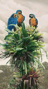"""The Three Amigos, Blue and Gold Macaw Canvas The Three Amigos by Rod Frederick LIMITED EDITION CANVAS Image size: 13""""w x 24""""h. Limited Edition of: 75 $475.00 issue price, for sale for $390.00  New in Wrapper.    """"These Blue-and-Gold Macaws can expect to live for over 70 years,"""" says Rod Frederick. """"Rain forests present their inhabitants with a relatively consistent weather and food supply."""