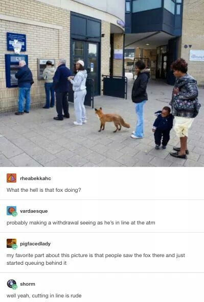 I had this fox in my neighborhood who just walked into the jiffy store like, every other day and looked around and left and everyone was cool with it...good times..
