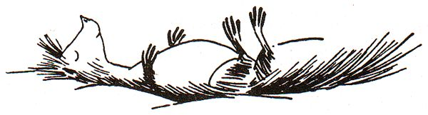 The Squirrel with the Marvelous Tail - Moomin Wiki