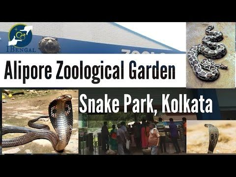 I have a feeling you'll like this one 😍 Kolkata Zoo Snake Park || Snakes in Alipore Zoological Garden  https://youtube.com/watch?v=kBd5Naw5YBU