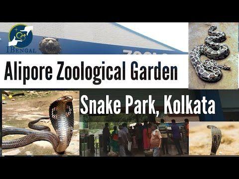 I have a feeling you'll like this one 😍 Kolkata Zoo Snake Park || Snakes in Alipore Zoological Garden  https://youtube.com/watch?v=kBd5Naw5YBU