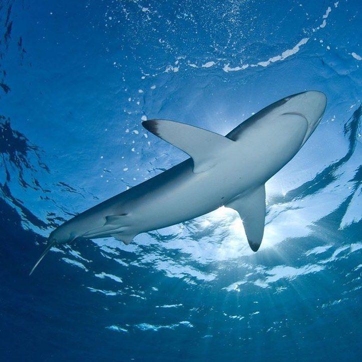 упоминание картинки акул на поверхности океана продажам лайков только