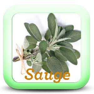 Usage : beurre blanc parfumé, caillette provençale, riz à la sauge, rôti de porc …