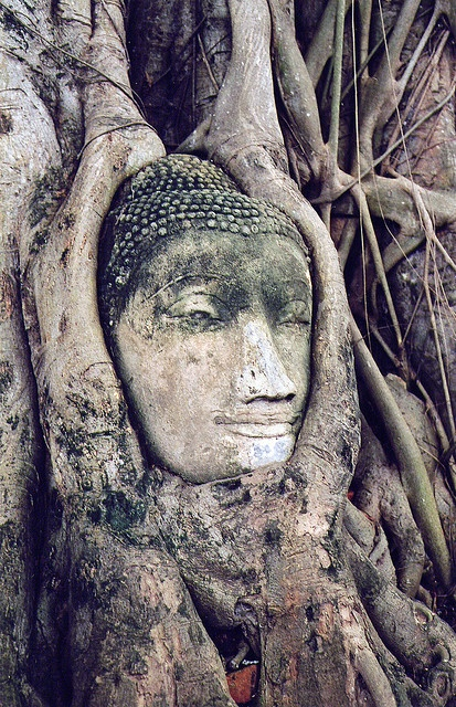 Statue so old it's been swallowed by this giant tree's roots