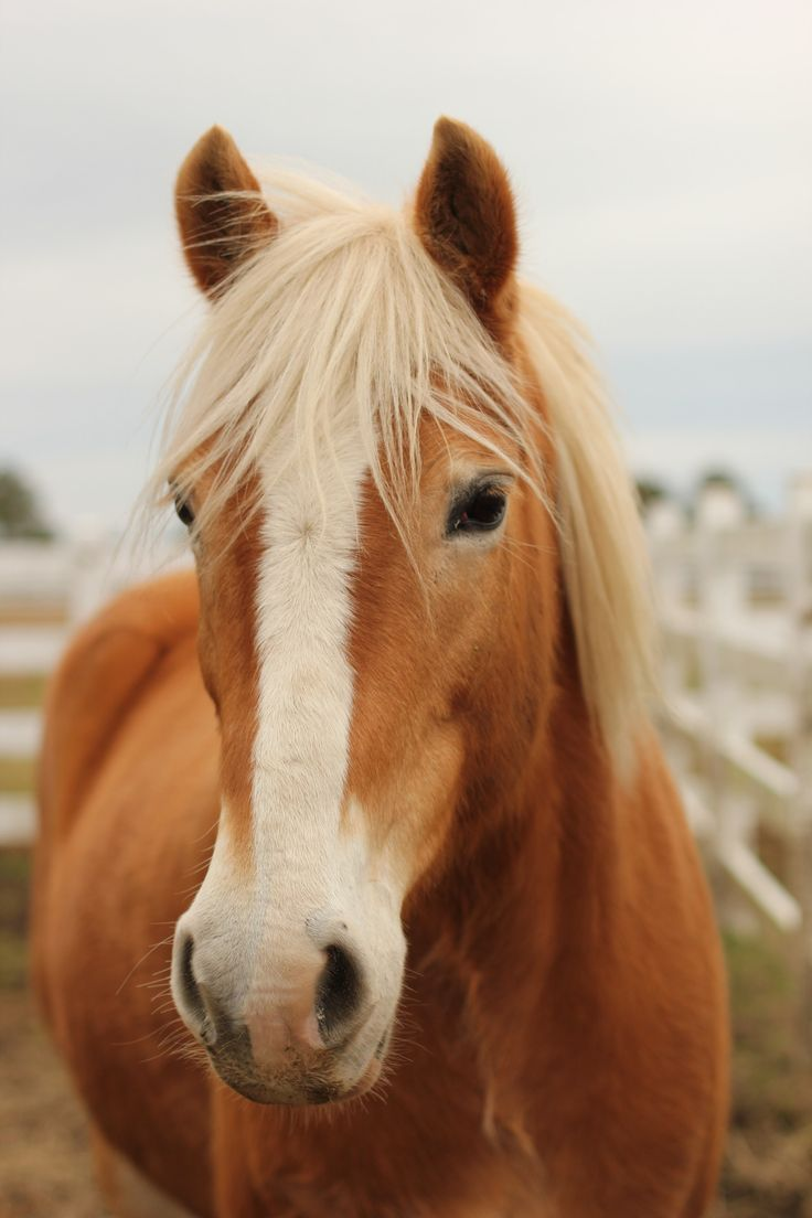 31 best images about Palomino horses on Pinterest ...