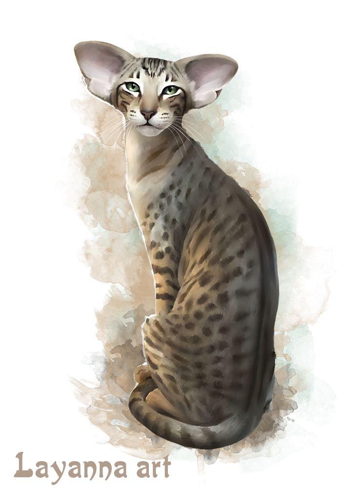 Кошка Оливка.  Нарисованный портрет, от Лаянны,  кошки породы Ориентальная. Вы…