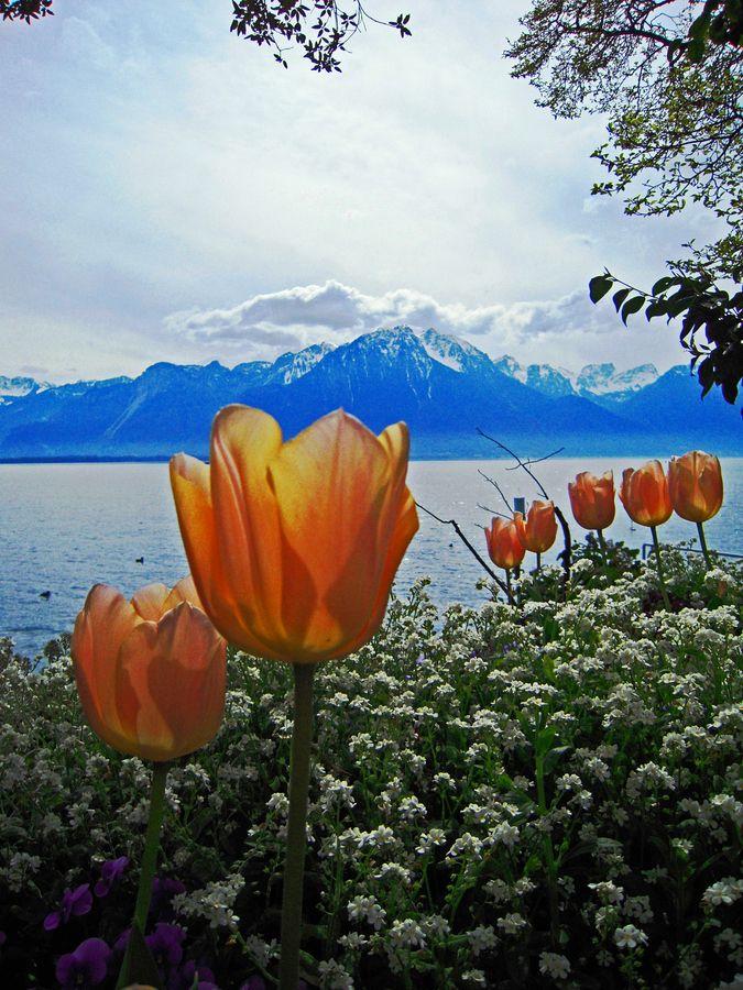 Colourful Montreux. Switzerland