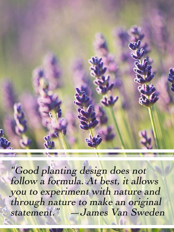 Flowering Wisdom Gardening Quotes From Eagleson Landscape Co Eagleson Landscape Co Garden Quotes Flower Quotes Landscaping Quotes