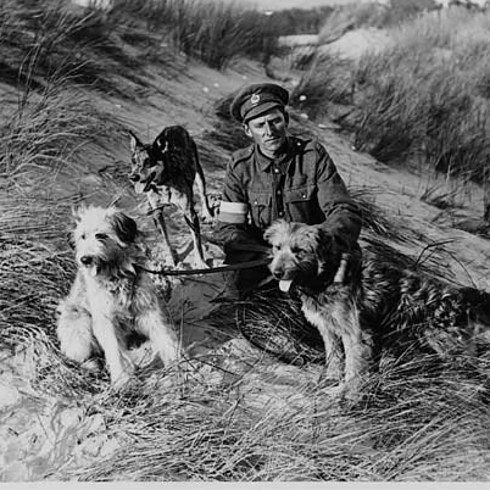 WWI: British messenger dogs with their handler, France. - Found via Buzzfeed