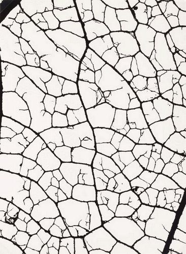 Standard    Denis Brihat  Fragment de feuille de peuplier  1980 (ca)     Gelatin silver print  29.7 x 21.8 cm