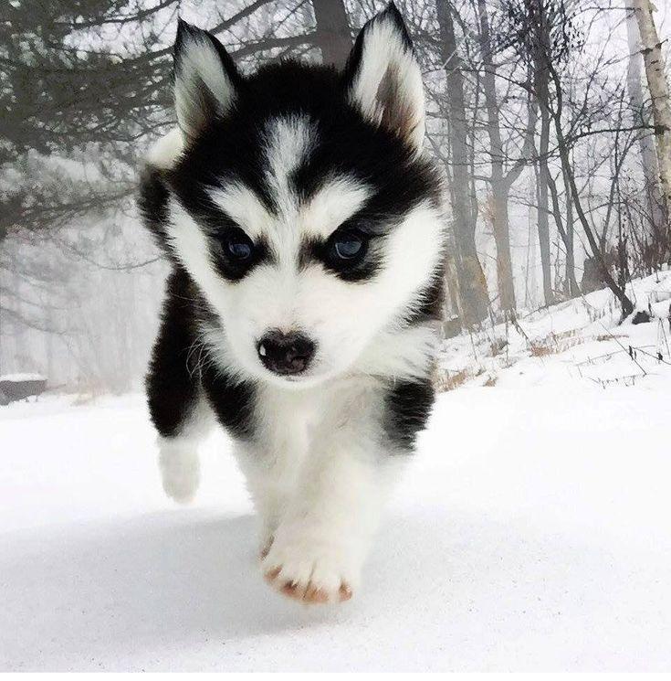 #puppies #cute #pupper #dogs – #puppies #cute #pupper #dogs – #cute #cutestanimals #cutestbabyanimals #Dogs #farmanima…