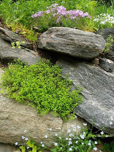 107 best images about gardening rock garden plants on for Landscaping quinns rocks