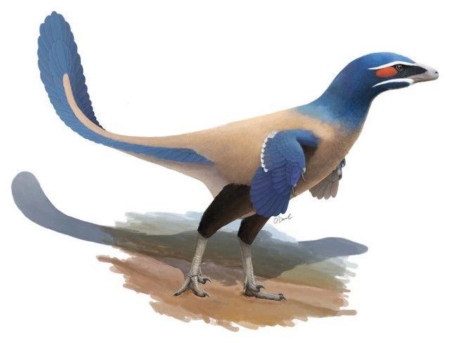 """Un articolo pubblicato sulla rivista """"Canadian Journal of Earth Science"""" descrive l'identificazione di una nuova specie di dinosauro con caratteristiche simili a quelle degli uccelli. Chiamato Albertavenator curriei, appartiene alla famiglia dei troodontidi e visse nell'odierna Alberta, in Canada, circa 71 milioni di anni fa. Il nome della specie è stato scelto dagli scienziati del Museo Reale dell'Ontario e del Philip J. Currie Dinosaur Museum proprio in onore del celebre paleontologo…"""